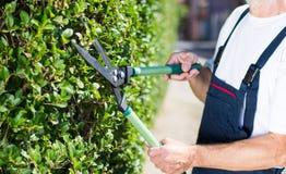 Siepe di arbusti della guarnizione del giardiniere con le forbici di giardinaggio Fotografia Stock