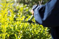 Siepe di arbusti della guarnizione del giardiniere con le forbici di giardinaggio Immagini Stock Libere da Diritti