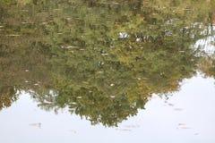 Siepe di arbusti di riflessione in lago Immagini Stock