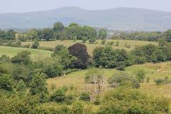 Siepi di arbusti irlandesi Immagini Stock