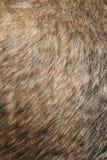 sierść psa Obraz Royalty Free