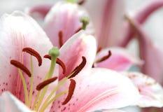 Sier bloemen stock foto's