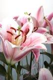 Sier bloemen stock fotografie