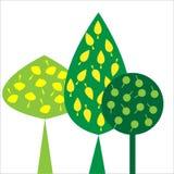 Sier bomen met bladeren op witte achtergrond Stock Foto's