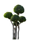 Sier geïsoleerde bomen Stock Afbeeldingen