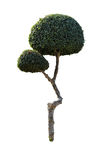 Sier geïsoleerde bomen Stock Fotografie