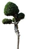 Sier geïsoleerde bomen Royalty-vrije Stock Afbeelding