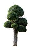 Sier geïsoleerde bomen Stock Afbeelding