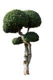 Sier geïsoleerde bomen Stock Foto's