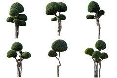 Sier geïsoleerde bomen Royalty-vrije Stock Foto