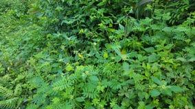Sier groene struiken stock afbeelding