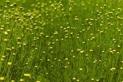 Sierlijk wildflowergebied Royalty-vrije Stock Afbeelding