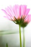 Sierlijke Bloemen Royalty-vrije Stock Afbeelding