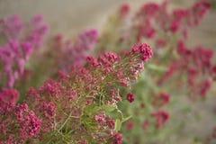 Sierlijke Roze Bloemen tegen Lichtgroene Achtergrond Royalty-vrije Stock Afbeeldingen