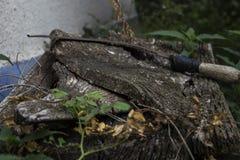 Sierp na starym woden stół zdjęcie royalty free