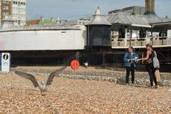 24 Sierpień, Redakcyjna fotografia seagull i dwa dziewczyny na Brighton plaży, 2017, Brighton, UK, Wielki Brytania, Obraz Stock