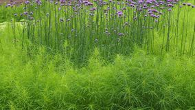 Sierplanten in een bloembed in het Park stock fotografie