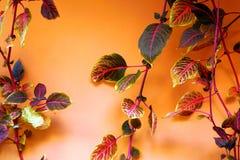 Sierplanten met zeer kleurrijke kleuren stock fotografie