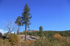Sierra árboles Imagenes de archivo