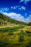 Sierra alpine Wiese stockfotos