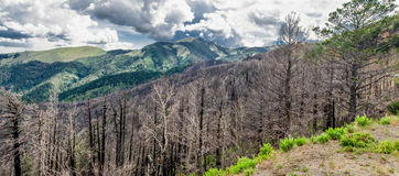 Sierra Blanca Panorama. This is a Panorama of Sierra Blanca Mountain shot in the Lincoln National Forest.  It is the second highest Mountain in New Mexico Royalty Free Stock Image