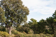Sierra de Espada στοκ φωτογραφία