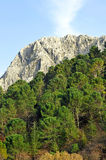 Sierra de Grazalema Natural Park, Cadiz province, Spain. Panoramic view of the pine forests in the mountains of the Sierra de Grazalema Natural Park in the Stock Images
