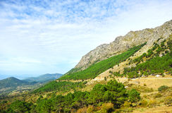 Sierra de Grazalema Natural Park, Cadiz province, Spain. Panoramic view of the pine forests in the mountains of the Sierra de Grazalema Natural Park in the Royalty Free Stock Images