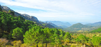 Sierra de Grazalema Natural Park, Cadiz province, Spain. Panoramic view of the pine forests in the mountains of the Sierra de Grazalema Natural Park in the Royalty Free Stock Photos