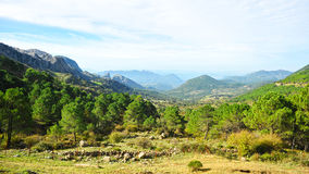 Sierra de Grazalema Natural Park, Cadiz province, Spain. Panoramic view of the pine forests in the mountains of the Sierra de Grazalema Natural Park in the Stock Photography