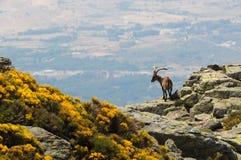 Sierra de Gredos Stock Images