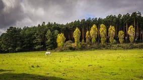 Sierra de Gredos, province of Avila, Castile Leon. Stock Image