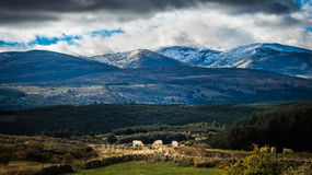 Sierra de Gredos, province of Avila, Castile Leon. Royalty Free Stock Photo