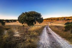 Sierra de la culebra en Zamora Espagne photo libre de droits