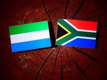 Sierra Leone flaga z południe - afrykanin flaga na drzewnego fiszorka isolat Obraz Royalty Free