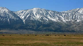 The Sierra Mountains. This is a picture of the Sierra Mountains taken from the Nevada side Royalty Free Stock Photos