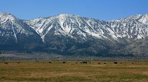 The Sierra Mountains Royalty Free Stock Photos