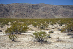 Sierra Nevada Photo stock