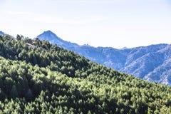 Sierra Nevada -bergen met bos in gebied van Andalusia in Spanje stock afbeeldingen