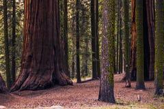 Sierra Nevada Forest fotos de archivo libres de regalías