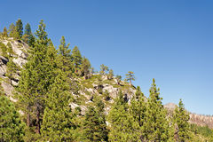 Sierra Nevada mountain forest Royalty Free Stock Photos