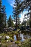 Sierra Nevada Mountain Lake. High mountain lake off Tioga Pass in Yosemite National Park Stock Images