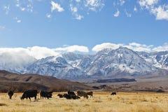 Sierra Nevada Mountains Fotografia Stock Libera da Diritti