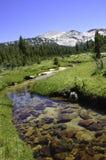 Sierra Nevada Steam Royalty Free Stock Photos