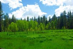 Sierra pré de source Photo stock