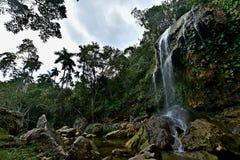 Sierra Rosario Biosphere Reserve, Pinar del Rio Stock Images