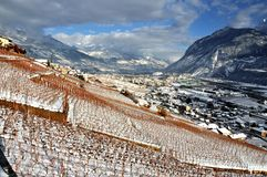 Sierre in the Swiss Alps. The alpine town of Sierre with mountains and vineyards Stock Photos