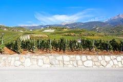 sierreswitzerland valais vingård Arkivfoton