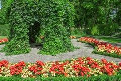 Siertuin met bloeiende begonia's Stock Fotografie