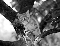 Siesta кота милый Стоковая Фотография